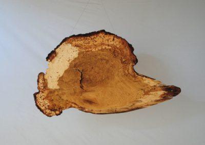 Holzphantasien - Eiche Knollenwuchs